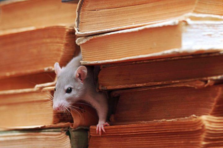 Ce qui repousse les souris et ce qu'elles n'aiment pas